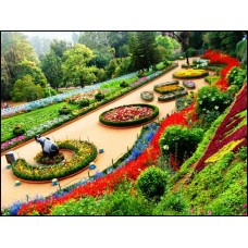 Mysore Ooty Coorg - Group Tour
